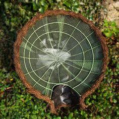 Igloo Hedgehog House: Amazon.co.uk: Pet Supplies