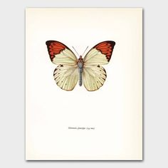 White Butterfly Art Cottage Chic Decor Orange Bedroom Wall