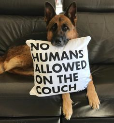 Dog owner? Must have throw pillow for your couch from Landshark Supply, your dog will appreciate t!  featured account @cena_germanshepherd