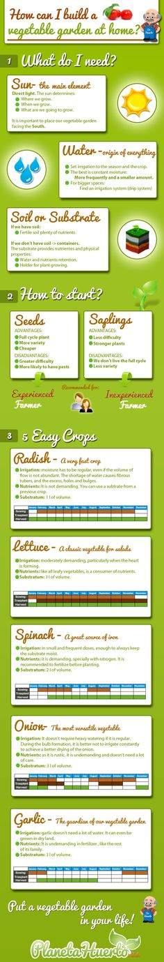 Original and entertaining infographyc which explains how to build a vegetable #garden at #home. It summarizes the main elements that we need to grow our  own vegetables and also some easy crops that can be useful if we are inexperienced.