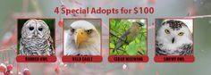 Last chance for our 4 Special Adopts for $100