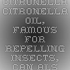 "Citronella  Citronella oil, famous for repelling insects, can also be used to get rid of cats. Citronella sticks are a common form, coming in citronella-impregnated plastic ""repeller sticks""."