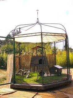 Beautiful rabbit and chicken coop!