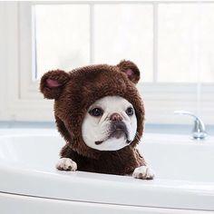 """Ha, ha, ha""....""hey, where'd everybody go?"", a Funny French Bulldog Puppy."