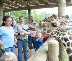 Helping your child get the most out of a children's zoo