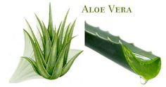 benefits of aloe vera juice in wieght loss and skin care.  See here for more details  http://healthtravelme.com/amazing-benefits-aloe-vera-skinhair-health/