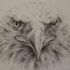 Najlepsze Obrazy Na Tablicy Rysowanie Ptaków 65 Animal Drawings