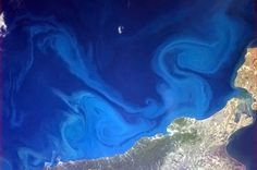 Photo From Astronaut Chris Hadfield on the ISS: A huge phytoplankton bloom stains the Black Sea blue. This microscopic algae sometimes go forth and multiply in such numbers that—duh—the bloom can be seen from space. Chris Hadfield, Earth And Space, Mind Blowing Pictures, Cool Pictures, Cool Photos, Amazing Photos, Earth Photos, Color Swirl, Space Photos