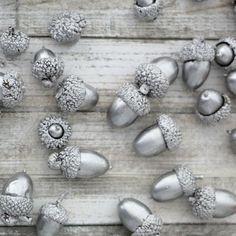 Silvery Acorns