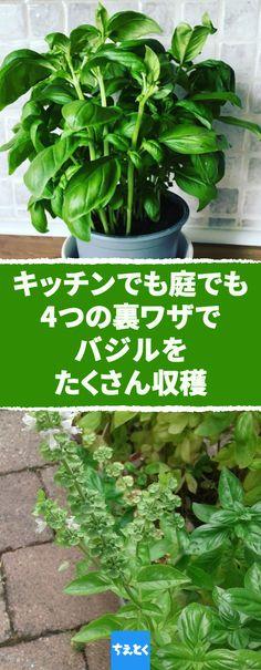 Growing Herbs, Garden Trees, Green Flowers, Botanical Gardens, Planting Flowers, Life Hacks, Home And Garden, Plants, Nice