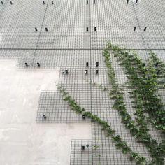 Garden Design Ideas : Wall mounted greenscreen® panels with notch cuts and no trim. Designed by Michael Maltzan Architecture. Green Architecture, Architecture Details, Landscape Architecture, Landscape Design, Garden Design, Facade Design, Wall Design, Wall Climbing Plants, Vertikal Garden