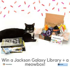 You could win a complete Jackson Galaxy Library PLUS a meowbox! Five runners up will receive a copy of new release, Total Cat Mojo. Tap the photo to enter now! Jackson Galaxy, Cat Gifts, Runners, Daddy, Kitty, Cats, Animals, Hallways, Little Kitty