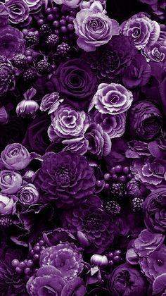 Most current Totally Free deep Purple Flowers Thoughts Purple flowers are noble flowers. They can be deluxe and fancy, fashionable in addition to boheme. Purple Flowers Wallpaper, Purple Wallpaper Iphone, Flower Phone Wallpaper, Aesthetic Iphone Wallpaper, Flower Wallpaper, Aesthetic Wallpapers, Black And Purple Wallpaper, Purple Flower Background, Purple Flower Arrangements