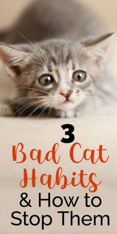 Some of our feline friends have a few behaviors that are unacceptable - for example, scratching the furniture, urinating outside of the litter box, or bothering us while we sleep. Fortunately, with a few tips and tricks, these issues can be resolved or avoided altogether! Cat Care Tips, Pet Care, Pet Tips, Crazy Cat Lady, Crazy Cats, Bad Cats, Bad Kitty, Kitty Kitty, Happy Kitty