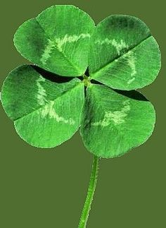 Asked my Realtor, Make me as Lucky as a Four Leaf Clover and sell.