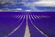 Imagine a field of blue upholstery to the horizon and an intense perfume of a thousand flowers of lavender that permeates an entire region. Now visualize a path dotted with chateaux, Romanesque churches and picturesque villages of cobbled streets each morning are alive with the sound of their markets. Yes, we speak of Provence that has captivated celebrities the likes of Angelina Jolie and Brad Pitt, who have acquired a mansion there to enjoy a delightful year round.