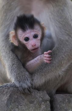 Photo by: Alexandra Cearns/Houndstooth Studio. 'Reach Out.' A wild baby macaque extends her tiny hand toward the camera. Safe in her mother's arms, her gesture epitomizes connection, innocence and vulnerability. Taken on the grounds of the Phnom Tamao Wildlife Rescue Centre, Cambodia.