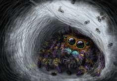 Jumping Spider mommy with baby spiders. I post em daily on my fan page :] ~~ [link] Jumping Spider Mommy with Babies Pet Spider, Spider Art, Spider Webs, Weird Insects, Bugs And Insects, Small World, Animals And Pets, Cute Animals, Animal Captions