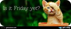 A Cool Funny cat facebook cover for your FB timeline. Choose from thousands of new Funny timeline covers with live preview.