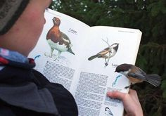 This bird landed on the page about itself: