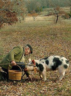 Truffle Hunting √ http://en.wikipedia.org/wiki/Truffle#Extraction