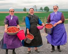 Amish - Women gathering strawberries to can