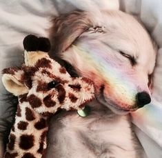Animals and pets, baby animals, funny animals, cute animals, dogs and pup. Cute Dogs And Puppies, I Love Dogs, Doggies, Hot Dogs, Cute Little Animals, Cute Funny Animals, Cute Animal Pictures, Cute Creatures, Animals And Pets