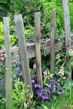 DIY Garden Fence Ideas to Keep Your Plants rustic fence in potager by anumrustic fence in potager by anum Picket Fence Garden, Backyard Fences, Garden Fencing, Potager Garden, Farm Fence, Garden Plants, Horse Fence, Brick Fence, Front Fence