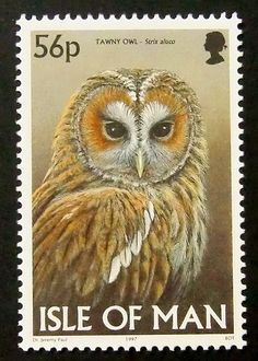 8080  Framed Postage Stamp Art  Tawny Owl  by PassionGiftStampArt, $13.90