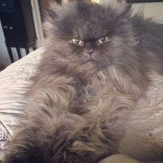 Col. Meow....'bed head' doesn't always stop at the head.  LOL