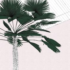A Green Palms Blush by Clare Halifax