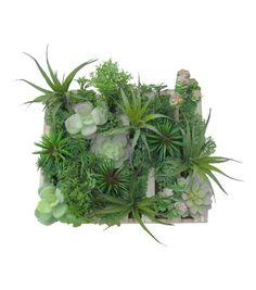 Bloom Room Succulent Grass Arrangement