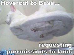 Hovercat to base...