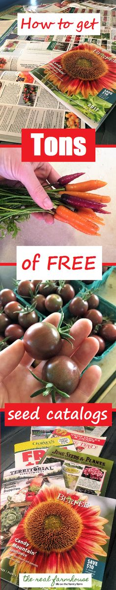 How to get free seed catalogs. 36 seed companies that send free seed catalogs. organic, heirloom, rare, specialty