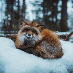 folklifestyle: @jasoncharleshill put this photo... - The Endless Forest