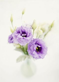 REVEL: Purple Accent Flowers