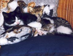Laura und Harry relaxen