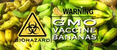 Corporations are testing GMO bananas on students - Mr Fitbody