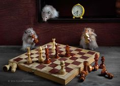chess player by Elena Eremina on 500px