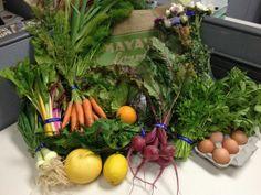 Farm-Basket Challenge Week 12: Fennel and final salad