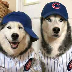 We believe.. go cubs                                                                                                                                                                                 More