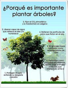 """""""¿Por qué es importante plantar árboles?"""""""