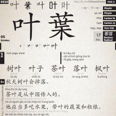 0920 - 叶 - yè; xié - #HSK4 ▬ https://www.facebook.com/ChinesePoster/photos/383288001812589