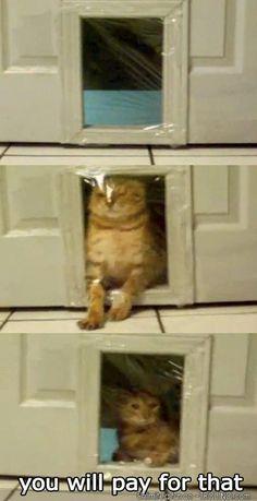 Troll LVL:CAT
