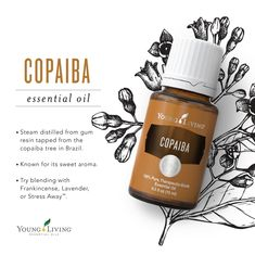 Young Living Essential Oils:  Copaiba Essential Oil | This sweet aromatic oil goes well with Frankincense, Lavender, or Stress Away.  WWW.THESAVVYOILER.COM