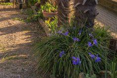 orto dei colori - Un giardino romantico con tecniche di coltivazione