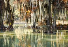 Swampy Reflection