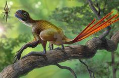 Epidexipteryx hui vs Nephila jurassica by atrox1.deviantart.com on @DeviantArt