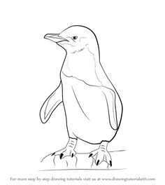 how to draw a penguin step by step for beginners