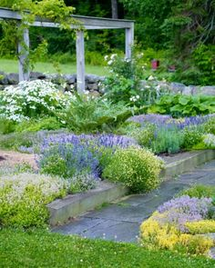 Flowering herbs grow around stately artichoke plants and bring a touch of the Mediterranean to this garden